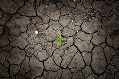 Overleefde installatie op droge gebarsten aarde Stock Foto's