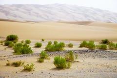Overlevende installaties op de zandduinen van Liwa-Oase, Verenigde Arabische Emiraten royalty-vrije stock fotografie