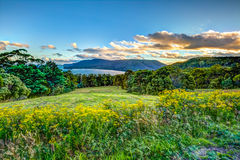 Overlook Tasmasn Peninsula Stock Image