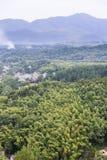 Overlooking bamboo Stock Image