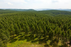 Overlooking of forest and hills with green trees Stock Images