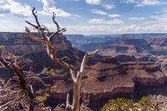 The Grand Canyon on a summer afternoon. Overlooking the Grand Canyon from the Southern Rim, west of Grand Canyon Village royalty free stock photography