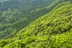 Overlooking green forest Stock Image