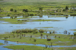 Overlooking the Marshlands. Overlooking green flora and pale blue waters in the wetlands Royalty Free Stock Images