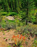Overlooking Mill Creek Stock Photos
