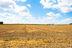 Overlooking a mowed cornfield with clouds. Royalty Free Stock Images