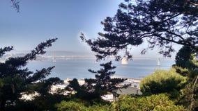 Overlooking San Francisco Bay. San Francisco Bay through trees Royalty Free Stock Image
