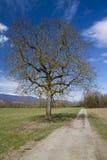 Overlooking tree Stock Photo