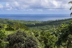 Lush vegetation Barbados Stock Photos