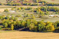 overlooking White Birch on the hillside Royalty Free Stock Photography