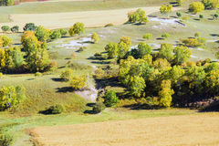 overlooking White Birch on the hillside Royalty Free Stock Photos