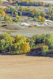 overlooking White Birch on the hillside Royalty Free Stock Photo