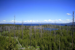 Overlooking Yellowstone Lake. The view from an overlook in Yellowstone National Park.  Yellowstone Lake can be seen in the background with new growth replacing Royalty Free Stock Photo