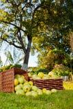 Overlopende appelen in manden Stock Afbeelding