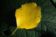 Overlying autumn leaves - macro shot stock image