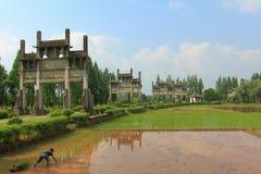 Overplantende rijst Stock Afbeeldingen