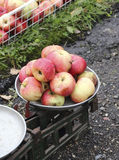Overripe apples on the old scales Royalty Free Stock Photos