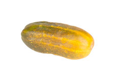 Overripe cucumber for seed isolated on white background Royalty Free Stock Photo