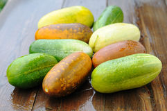 Overripe cucumbers Royalty Free Stock Photo