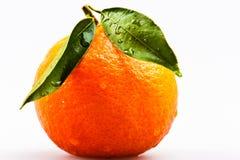 Overripe mandarin Stock Images