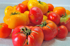 Overripe red tomatoes Stock Images