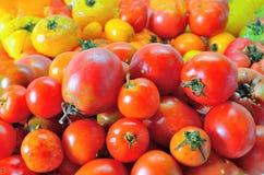 Overripe red tomatoes Stock Image