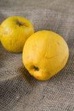 2 overripped золотые яблоки на ткани джута Стоковая Фотография RF