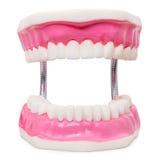Oversize human teeth prosthesis isolated on white. Royalty Free Stock Photos