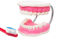 Oversize teeth prosthesis with toothbrush. Royalty Free Stock Images