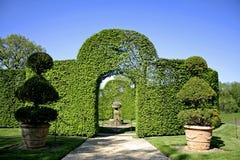 Overspannen schurbs in tuin Royalty-vrije Stock Foto