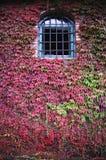 Overspannen venster met een rooster op de achtergrond van installaties royalty-vrije stock afbeeldingen