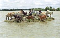 Overstromend in deltabangladesh, klimaatveranderingen stock foto