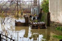 Overstroming in Transcarpathië Stock Fotografie