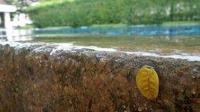 Overstromingswater van zwembad Stock Foto