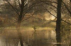 Overstroomd bos bij dageraad Royalty-vrije Stock Afbeeldingen