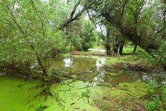 Overstroomd bos dichtbij Donau Stock Afbeeldingen
