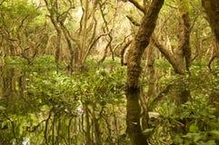 Overstroomd bos, het Meer van het Sap Tonle, Kambodja Stock Afbeelding