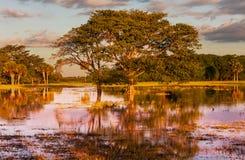 Overstroomd gebied Stock Afbeelding