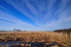 Overstroomd landbouwgebied Stock Fotografie