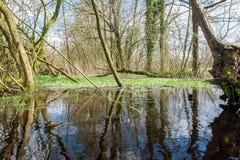 Overstroomd Moerasland dichtbij Orvelte royalty-vrije stock fotografie