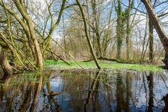 Overstroomd Moerasland dichtbij Orvelte royalty-vrije stock afbeeldingen