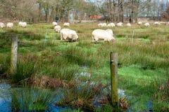 Overstroomd Moerasland dichtbij Orvelte stock fotografie