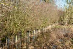 Overstroomd Moerasland in oosten-Vlaanderen stock foto