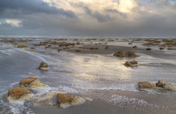 Overstroomd strand met Zandkweekgras Royalty-vrije Stock Fotografie
