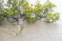 Overstroomd voetpad in Brisbane Stock Afbeelding