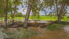 overstroomde bomen Stock Afbeelding
