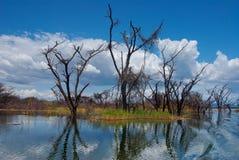 Overstroomde bomen bij meer Stock Afbeeldingen