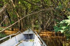 Overstroomde bomen in het Regenwoud van Amazonië, Brazilië Royalty-vrije Stock Fotografie