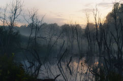 Overstroomde bomen in het zonsonderganglicht Royalty-vrije Stock Afbeeldingen