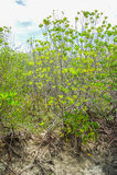 Overstroomde bomen in provincie van mangrove de bosphetchaburi thailand Royalty-vrije Stock Foto's